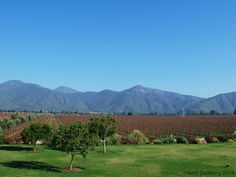 Casablanca Valley Wine Tours – Tasting Their Wines With a Walking or Driving Tour