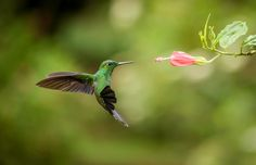 Top Pacific Northwest Plants to Attract #Hummingbirds http://greenwoodhardware.com/top-pacific-northwest-plants-attract-hummingbirds/