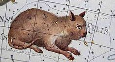 "Felis, as depicted in Bode's Uranographia (1801). Constellation invented by 18th century French astronomer Jerome Lalande, but never made it into common usage. This is a very peculiar looking cat. Mona Evans, ""Obsolete Constellations"" http://www.bellaonline.com/articles/art300737.asp"