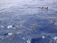 Dolfijnentocht