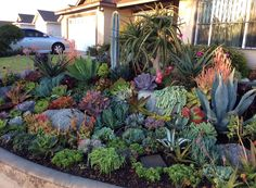Beautiful succulent garden by Succulent Wonderland