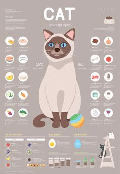 Infographics Using Excel Information Poster, Information Design, Information Graphics, Poster Cat, Infographic Examples, Infographic Posters, Cat Design, Illustrations And Posters, Grafik Design
