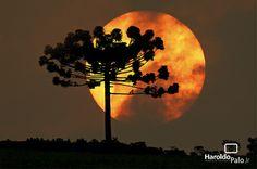 �rvores, a sombra perfeita!por Dep�sito Santa Mariah