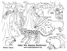 Learn the Rainforest Animals | Rainforest animals, Matching games ...