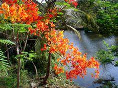 Goa, India. Looks amazing...