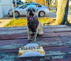 Miggy is two!  #chihuahua #chihuahuasofinstagram #pomeranian #pomeriansofinstagram #chipomsofinstagram #threedogbakery #threedogpartridgecreek #dogsofinstagram #dog #dogcake #birthdaycake #cutedogs #ilovemypet #ilovemydog  by brittpaige77  http://bit.ly/teacupdogshq