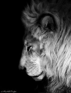 King. Philly Zoo. Photo by Gypsy Mare Studios.