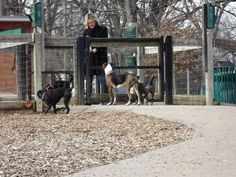 Dog park dos and don'ts