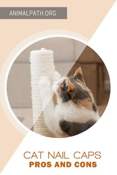 Are you contemplating getting nail caps for your cat? Find out the pros and cons. Cat Nail Caps, Soft Nails, Claw Nails, What Cat, Friends In Love, Cats And Kittens, Kitty, Nail Art, Pets