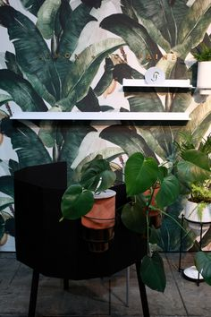 8 of Our Favourite Stands at Design South Africa - Visi South Africa, Plant Leaves, The 100, Flowers, Plants, Design, Plant, Royal Icing Flowers