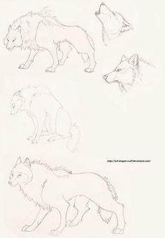 Wolf Sketch by Ash-Dragon-wolf