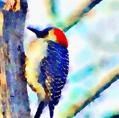 Red-Bellied Woodpecker, watercolor on canvas
