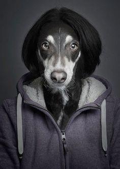 Tale cane tale padrone