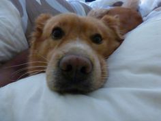 Denali, the love of my life… thank you for your friendship, loyalty, love and endless joy you bring.