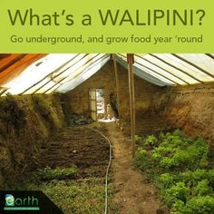 A walipini is a greenhouse that's built into the ground to take advantage of the more stable temperatures and thermal mass of the earth. Ranging from simple to elaborate, these structures allow you to grow all year long, in almost any climate on earth. #gardendesign