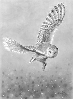 Barn Owl in Flight — Nolon Stacey eagle owls of paradise birds Flying Owl Tattoo, Tattoo Bird, Owl Tattoos, Owl Bird, Pet Birds, Lechuza Tattoo, Elfen Fantasy, Owl Sketch, Owl Tattoo Design