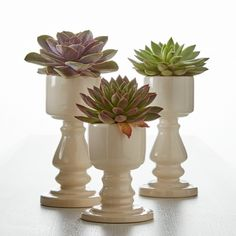Super Succulent Planter Pedestals By Gardenuity