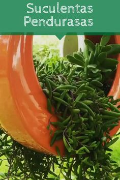 Cactus Y Suculentas, Garden Ideas, Succulents, Herbs, Vegetables, Hanging Succulents, Beautiful Gardens, Easy Crafts, Tasty Food Recipes