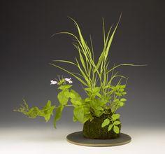 kusamono (accent plant) kokedama