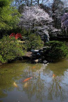 'Koi Pond,' Japanese Garden, Birmingham Botanical Gardens, Birmingham, Alabama | Bonnie Blanton, on Flickr. #japanese #gardens