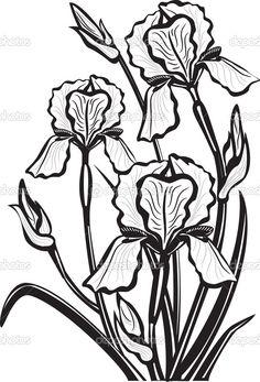 croquis de fleurs d'iris - Illustration: 5346645