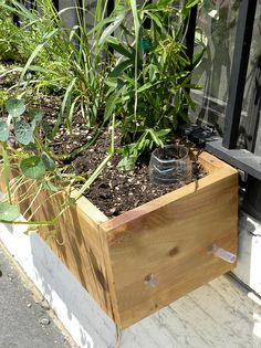 Article about sub-irrigated planters with explanation and examples of how to make some out of recycled materials like storage boxes and plastic bottles. Inside Urban Green, Brooklyn Pie Shop Window Boxes Become Sub-irrigated Planters (SIPs) by GreenScaper, via Flickr.