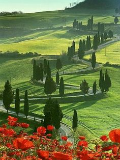 Winding Road and Poppies, Montichiello Tuscany, ItalyThis photographic print is digitally printed on archival quality paper  with vivid color and exceptional detail, suitable for museum or gallery  display. Multiple sizes available.Buy here.