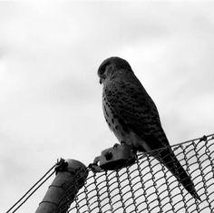birdy Zurich, Owl, Bird, Animals, Animales, Animaux, Owls, Birds, Animal