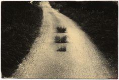 минимализм в фотографиях Масао Ямамото 4