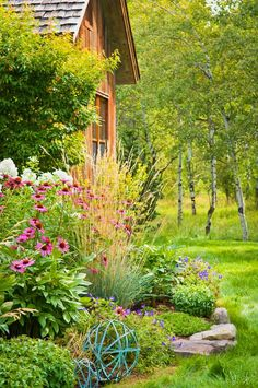Purple coneflower, white phlox, blue geraniums, ornamental grass... and birch trees in rough grass beyond the mown turf.
