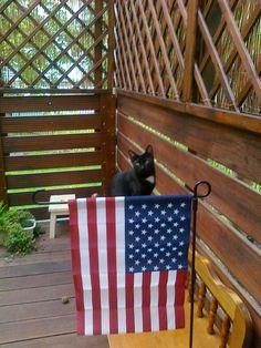 Zuzio celebrating the 4th of July!