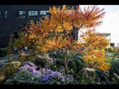 Autumn colours ,the high line