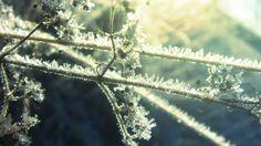 Winter Frost [1920x1080]
