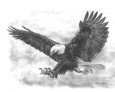 Eagle drawing done in pencil.