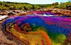 Image result for rainbow river colombia
