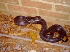 How to Keep Snakes Out of Your Garden --> http://www.hgtvgardens.com/animals-and-wildlife/snakes-alive-how-to-keep-snakes-from-sticking-around?soc=pinterest