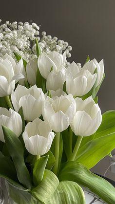 dreamy tulips in morning gloom