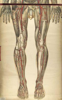 Body of Knowledge: Design Observer