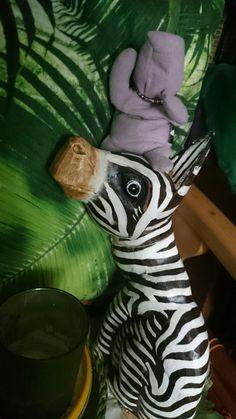 Hipcio and zebra