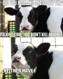 Image result for cow quotes