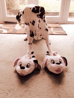 Gracie trying out her new slippers via Imgur