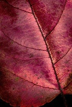 Leaf | Very cool photo blog