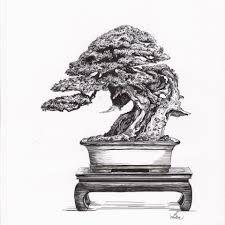 Resultado de imagen para bonsai tree sketch