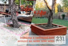 Before and After: DIY Redwood Planter Box around an Alder tree with a seat top.