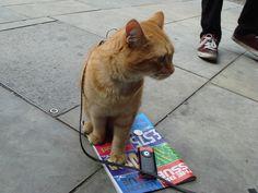 Big Issue Seller's Cat | Flickr - Photo Sharing!