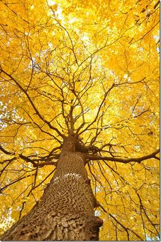 Looking up through the fall tree...BEAUTIFUL