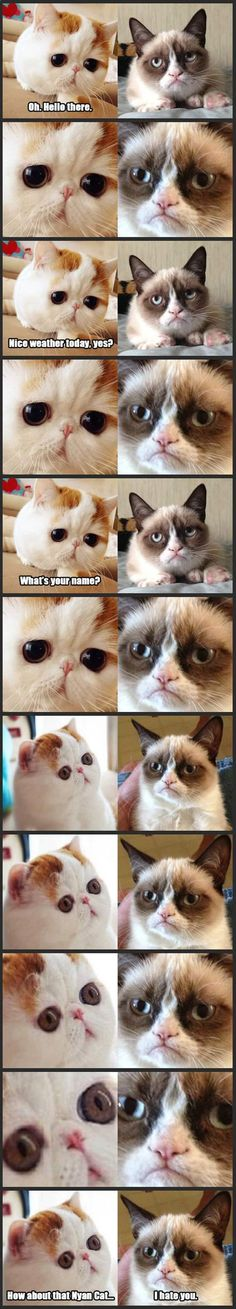 Snoopy Cat Meets Grumpy Cat… >>>>> this is that awkward conversation you don't want to have. I am actually laughing pretty hard