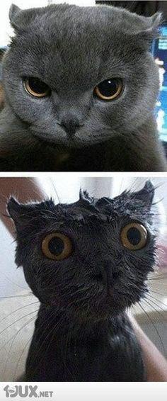 Katzenwäsche Vorher / Nachher Effekt ! :D