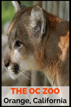The Orange County Zoo is a small 8-acre zoo located within the 477-acre Irvine Regional Park in the city of Orange, California.  The zoo is mainly home to animals and plants that are native to the Southwestern United States.  The zoo offers excellent fiel