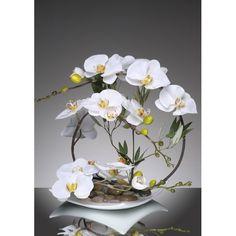 Orchidée blanche ..
